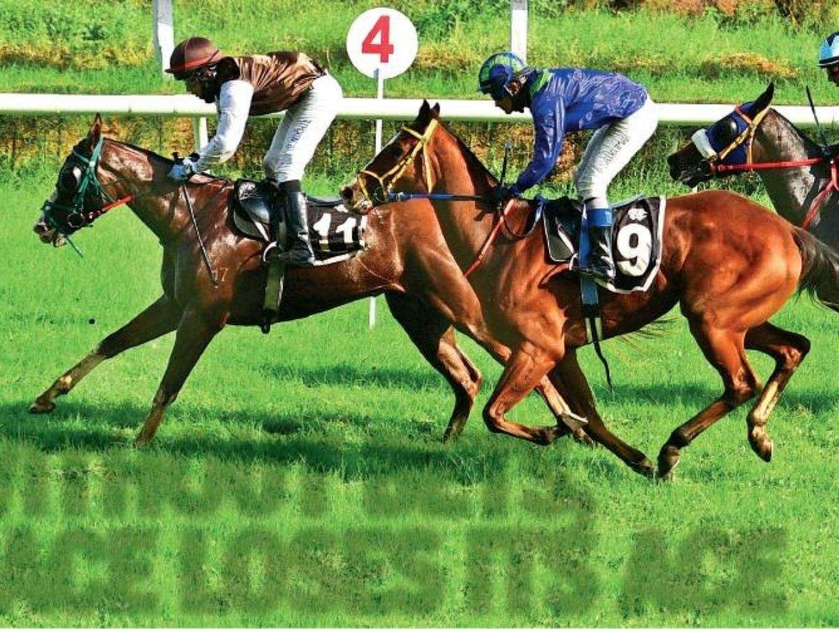Guindy race course betting lines betting news injuries