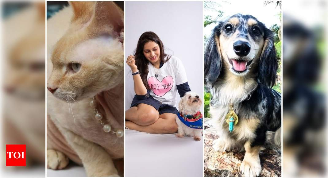 Real Housewives of Beverly Hills: From Priyanka Chopra's baby Diana to Lisa Vanderpump's Giggy, pets up their bling game