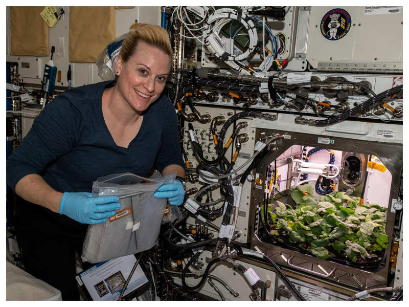 NASA is growing radish in space and this is why they chose the vegetable