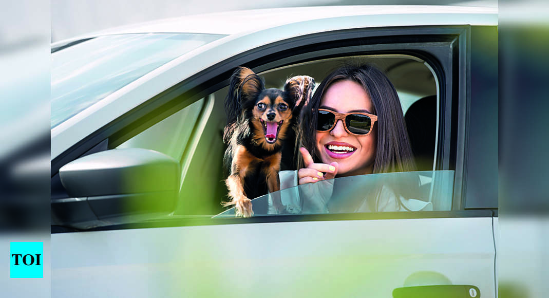 From smart planning, extra food to pet-friendly accommodations, pet parents take road trips with safety checks amid pandemic