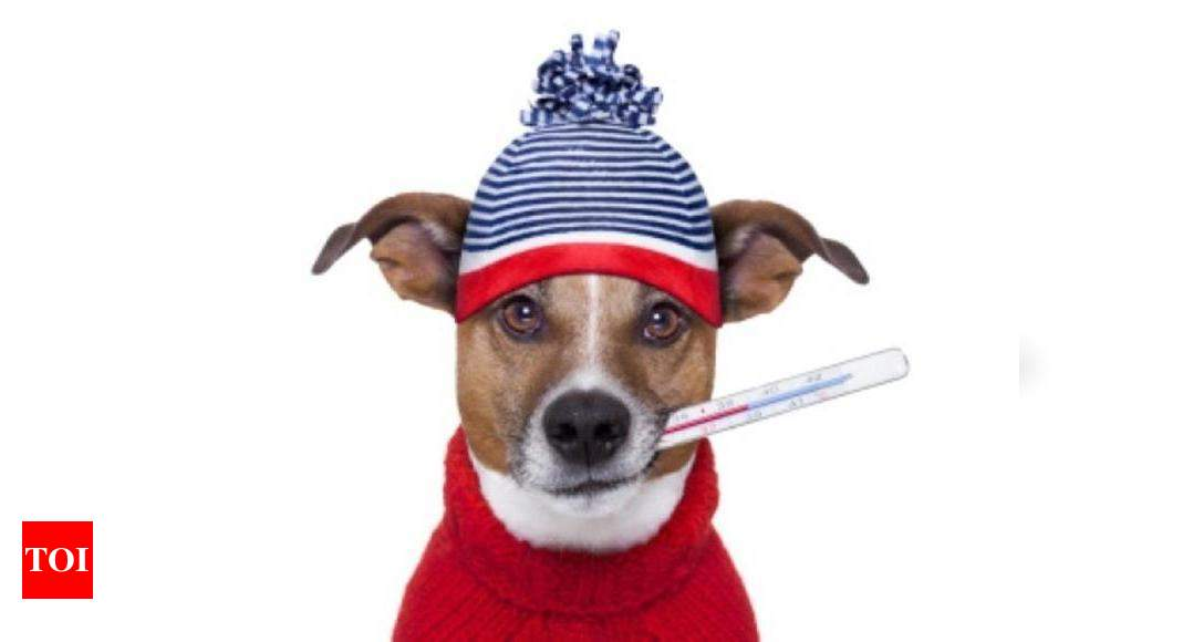 Keep your furry friend warm this winter