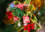 Merry Christmas 2020: Know all about the Mistletoe tradition that brings Christmas romance