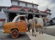 Karnataka: Dharmasthala flaunts gau rickshaw, car
