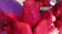 What are winters without strawberries and cream in Maharashtra? If you are craving some strawberries, check out this video!