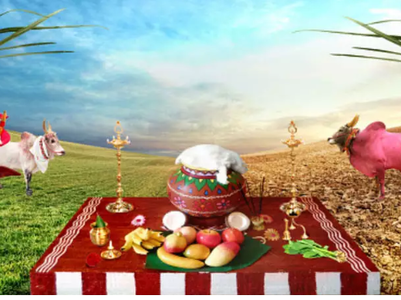 Top 50 Pongal wishes, messages and quotes
