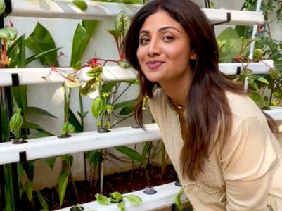 Glimpses of Shilpa's hydroponic farm