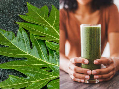 Papaya leaf juice: Health benefits, how to make
