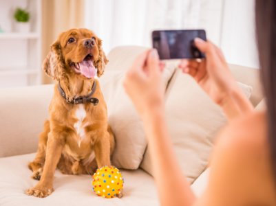 Tips for getting a picture-ready photo with your pet while travelling