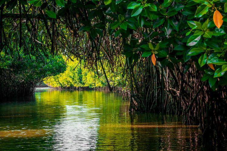 Entering-the-world-of-Pichavaram-mangroves
