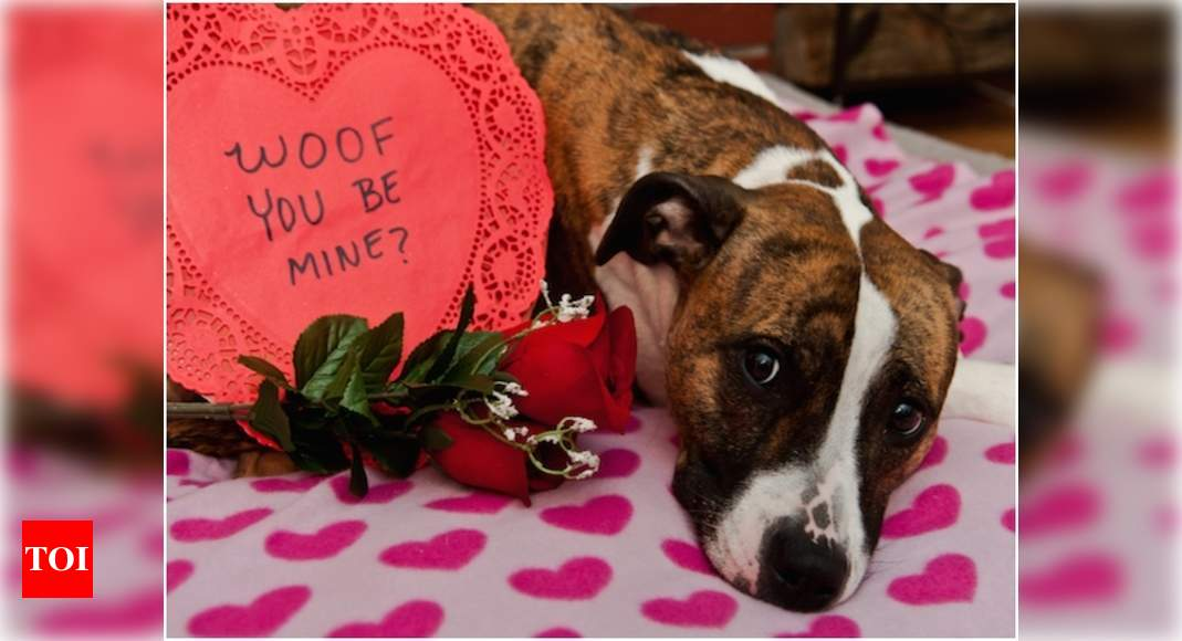 Valentine's day pets: Pet parents make Valentine's Day special for their pooches