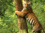 Top 10 forests of India to visit for every nature lover