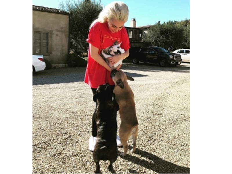 Lady Gaga's dogs return unharmed