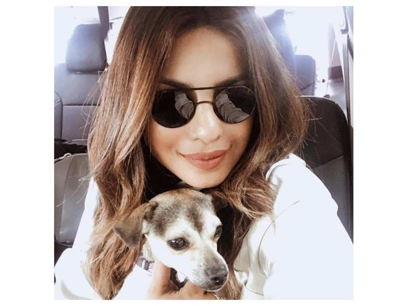 Priyanka Chopra captures a cute moment of her dog Diana sleeping comfortably and it is simply adorable
