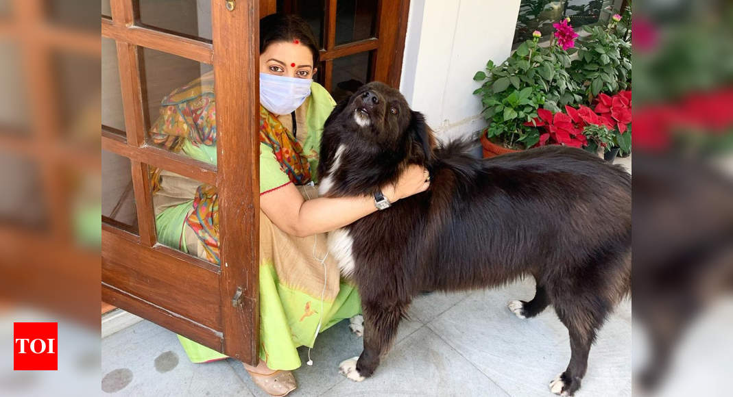 Smriti Irani posts an adorable picture with her pet; jokes, 'When sadda kutta is not 'Tommy' but Sheru' - Times of India
