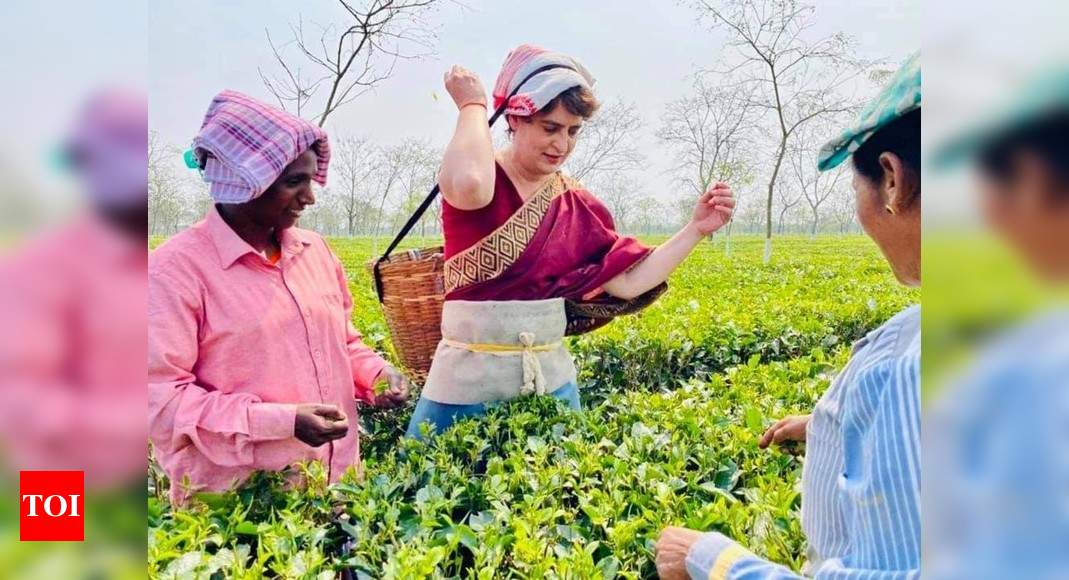 Priyanka's 'chai pe kharcha' sip in Assam tea garden |  India News – Times of India