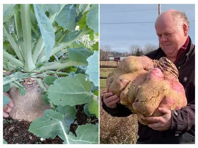 This is the heaviest Turnip in the world