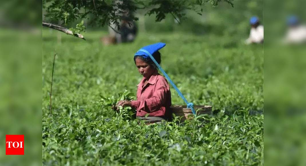 Indian tea exports dip 18% in 2020