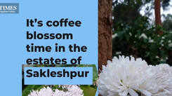 It's coffee blossom time in the estates of Sakleshpur
