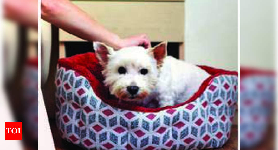 Create a cosy nook for your pet using these DIY tips