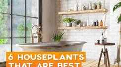 6 Houseplants that are best for the bathroom