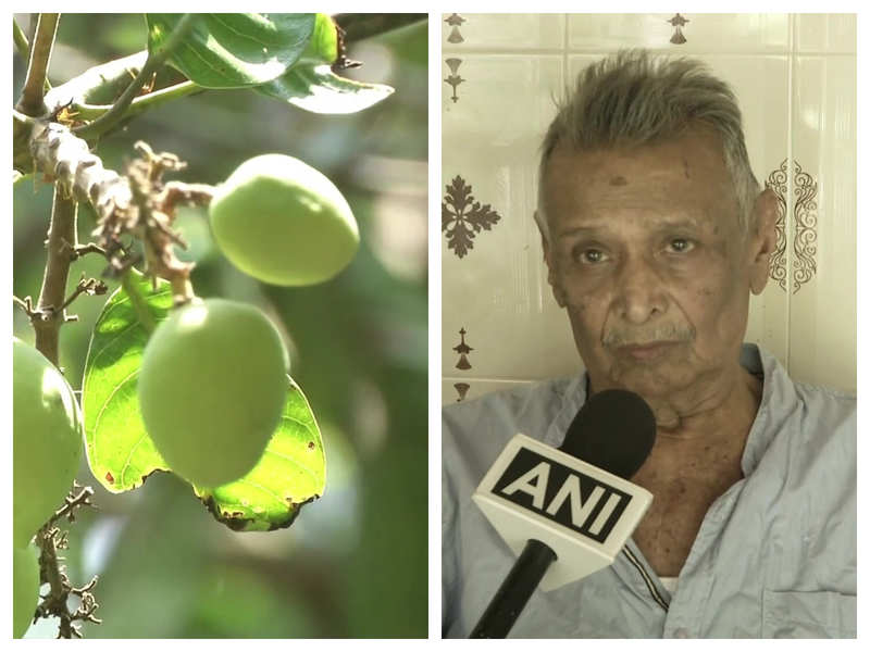 This 84-year-old man has preserved over 150 rare mangoes