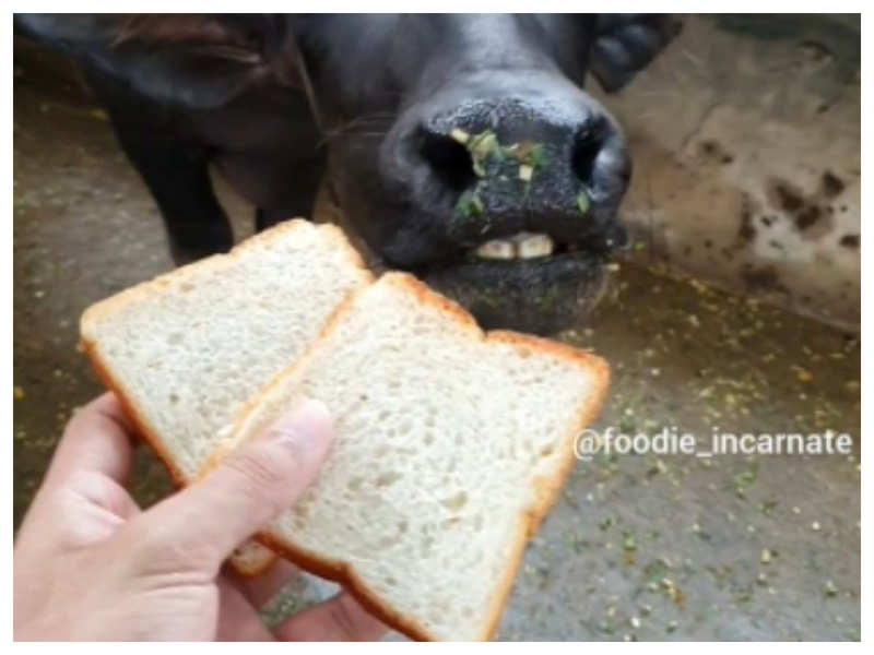Watch: Buffalo relishes special sandwich, internet is amazed
