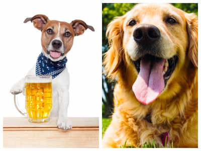 Imagine your dog earning a salary of $20,000 for tasting beer?