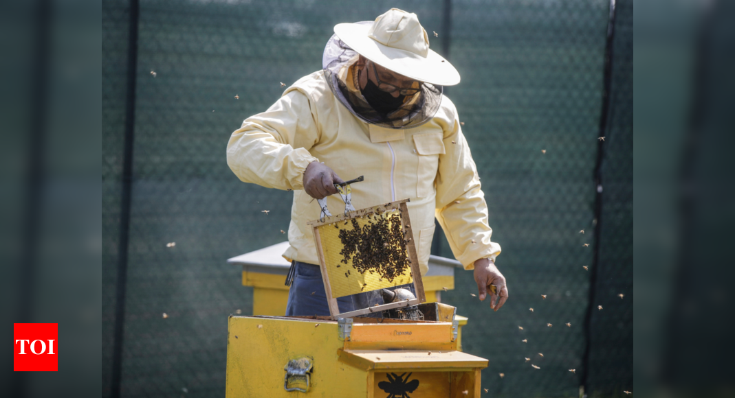 Milan gets buzzier with 1 million bees in designer hives - Times of India