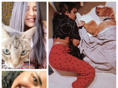 Tollywood celebs and their pandemic companions