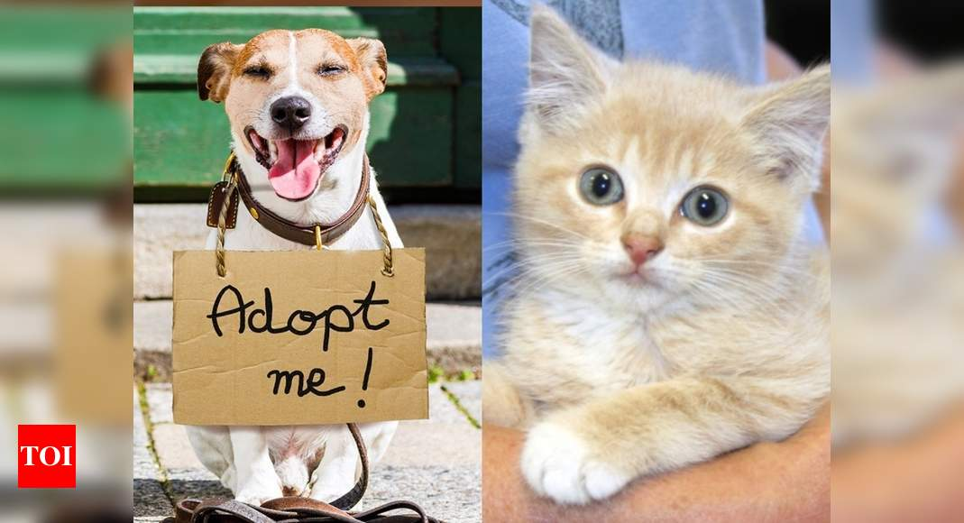 Vsod: COVID deaths result in rise of orphaned and abandoned pets in India