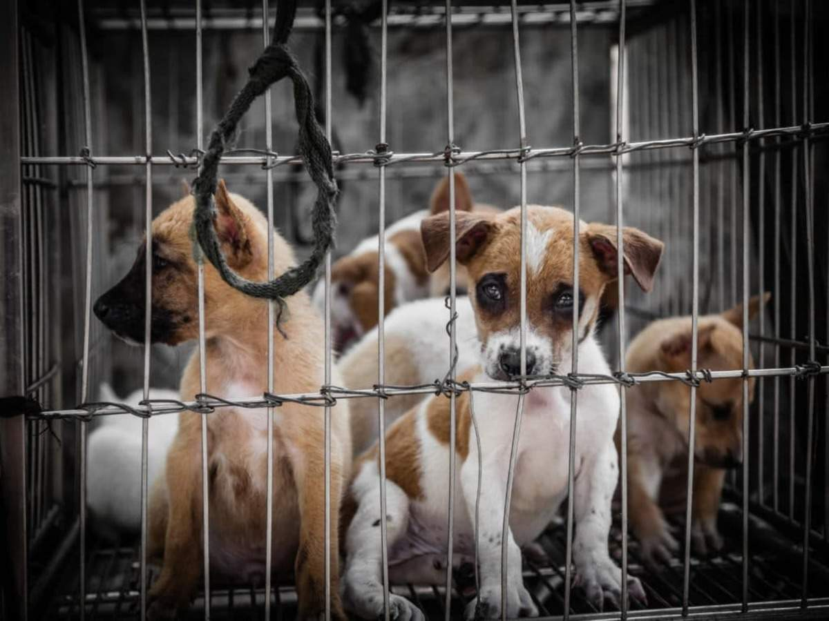 Proposed amendments to the Prevention of Cruelty to Animals Act: FIAPO  seeks stricter penalties | India News - Times of India