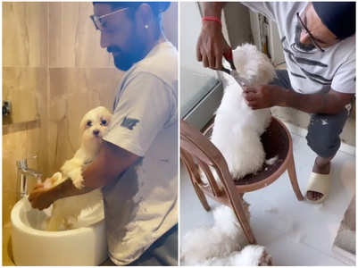 Remo's cute grooming session for his doggos