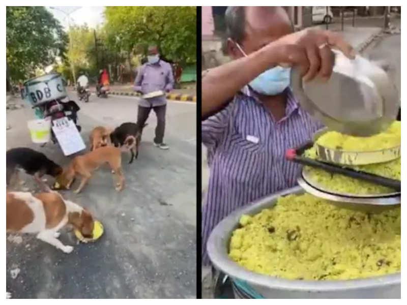 Watch: This Nagpur man feeds 150 dogs Chicken and Mutton Biryani daily