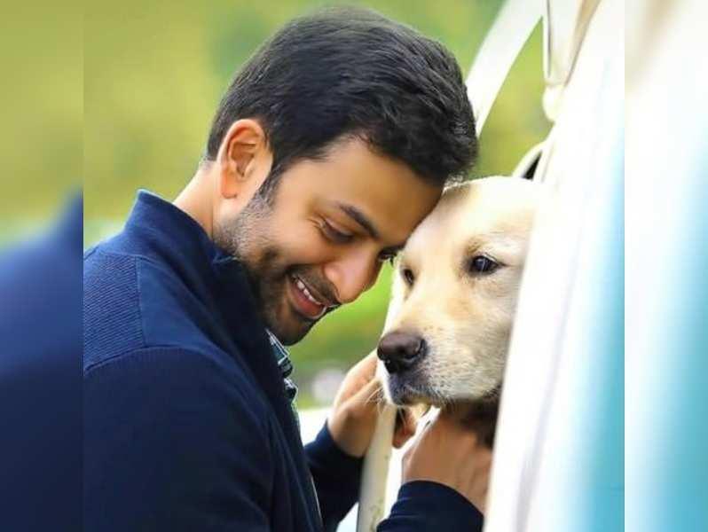 Superstar Prithviraj to present 777 Charlie in Malayalam
