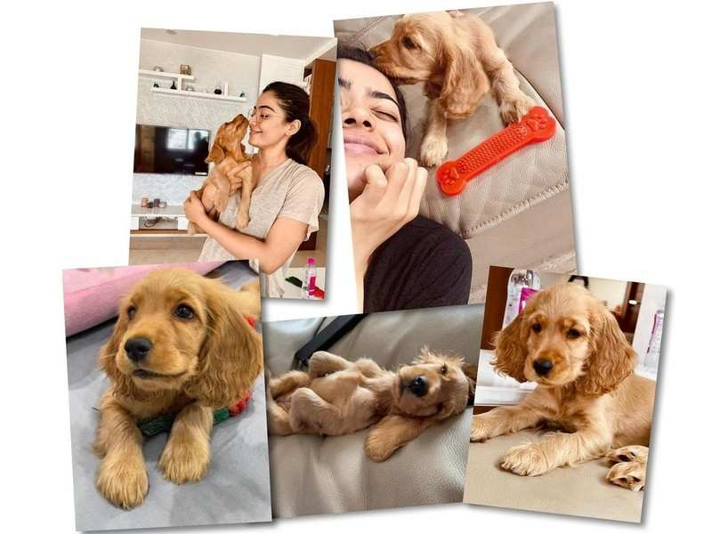 Rashmika Mandanna about her new puppy: It was love at first sight