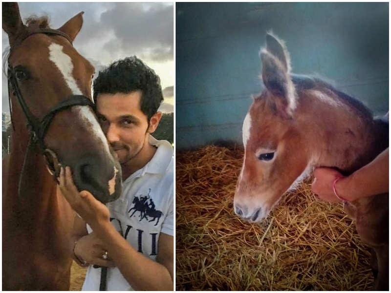 Randeep Hooda's horse 'Dream Girl' gives birth to a female offspring! Names her 'Hope'