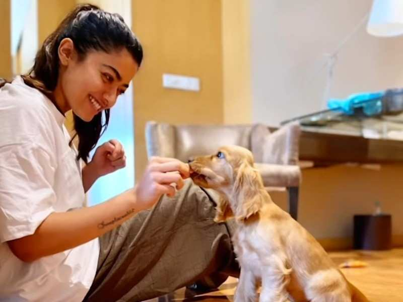 Rashmika Mandanna flies to Mumbai with her furry baby Aura and shares a glimpse into their day