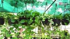 Sale of air-purifying plants on a rise to combat pollution