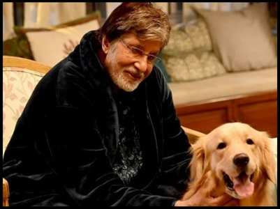 Amitabh introduces fans to Goodbye co-star