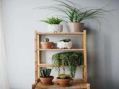 Best indoor plants with health benefits