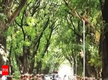 Agra to get 'herbal roads' with medicinal trees on both sides