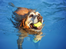 Simple tips to protect your pets from heatwave
