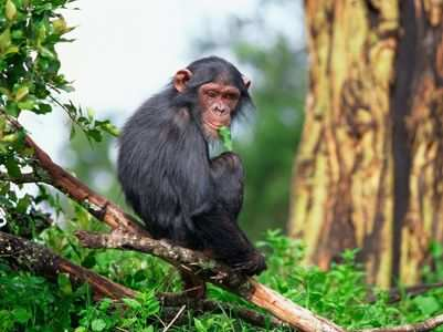 Monkey B Virus: All you need to know