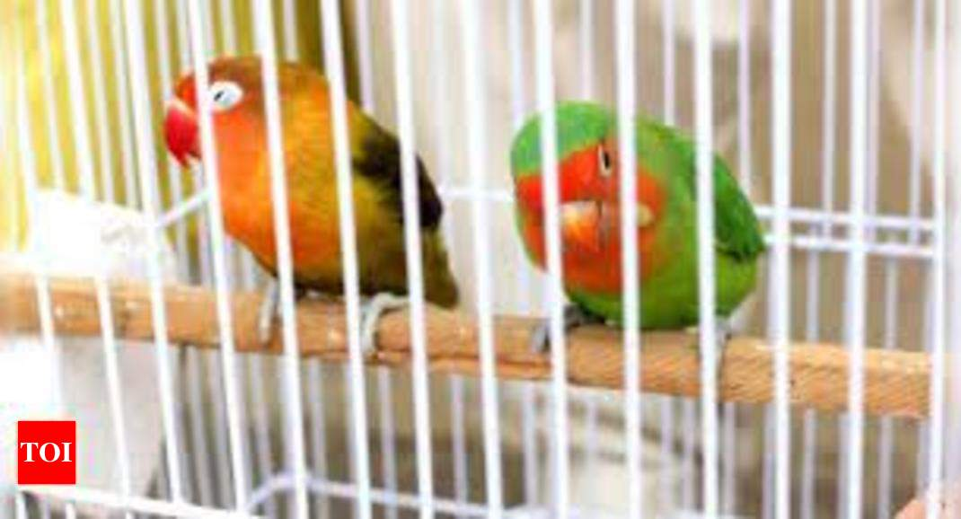 AWBI issues advisory to states and UTs to ban caging of aerial birds | India News – Times of India