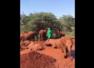 Viral video shows elephants enjoying a mud bath