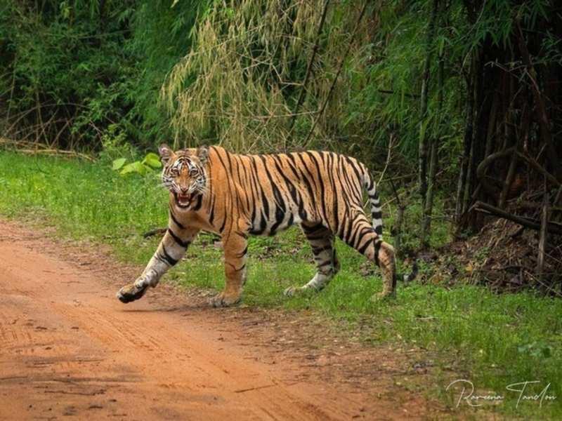International Tiger Day 2021 (Image source: Instagram)