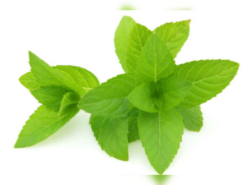 Benefits of peppermint oil - Times of India  Natural remedies for pimples 8508923