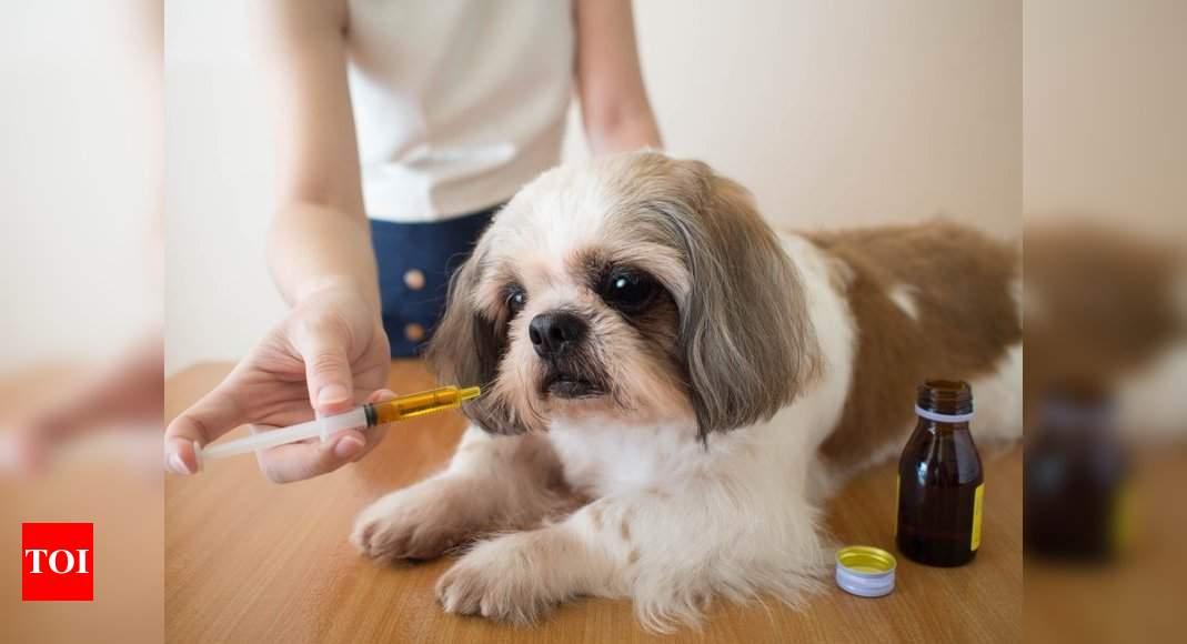 Caring for your senior dog with age-related issues