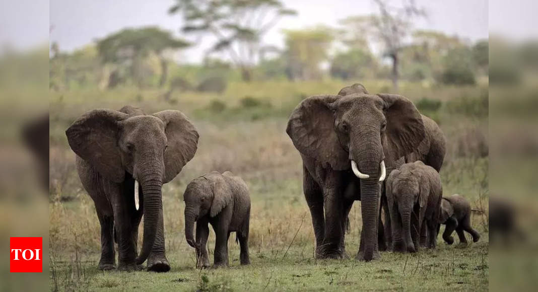 Sri Lanka bans 'drunk driving' of elephants in new protection law thumbnail