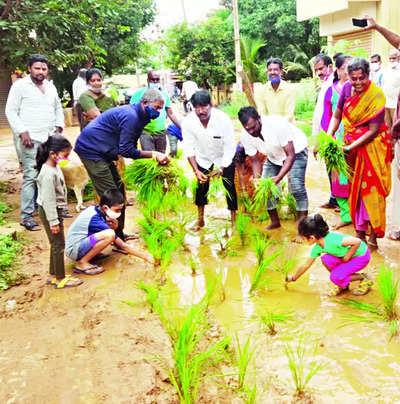 Bengaluru residents plant paddy as road turns slushy   Bengaluru News – Times of India